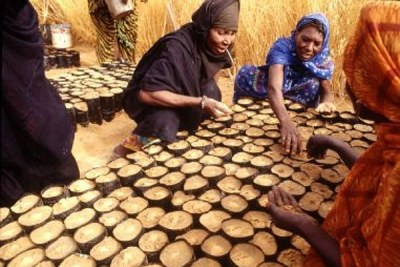 Mauritania: women workers in a tree nursery.