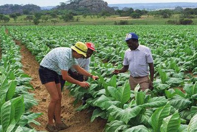 File Photo:Zimbabwe Farmer