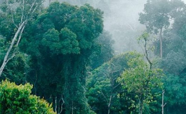 dwindling forest covers As the role of tropical forests, or what's left of it, becomes more crucial in the reduction of atmospheric carbon, a fresh report from the india state of forest report 2015 on the decrease of 628 sq km forest cover in the north east region of.