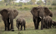 Why It's So Important to Understand How Elephants Sleep