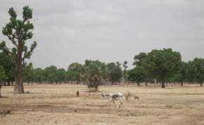 With a Bit of 'Time Travel', Mali Prepares Farms of the Future