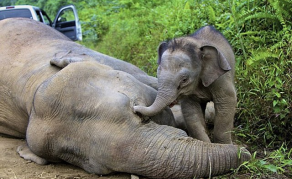 Elephant Poaching Drops in Tanzania