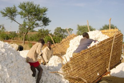 Cotton from Burkina Faso used to make textiles. Some countries hold the right to export many products, including textiles, under the quota-free and duty-free provisions of AGOA.