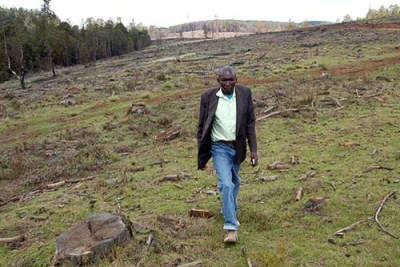 A man walks through a depleted section of Mau Forest in Nessuit area. The Kenyan Government plans to evict illegal settlers from Mau Forest Complex.