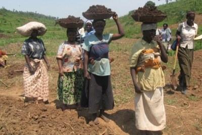 Rwandan farmers.