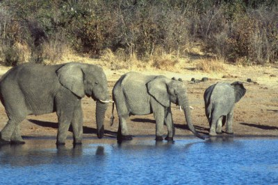 Elephants (file photo).