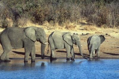 Elephants in Hwange, Zimbabwe.