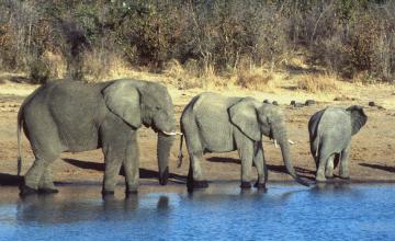 Zimbabwe Elephants Killed in Suspected Cyanide Poisoning
