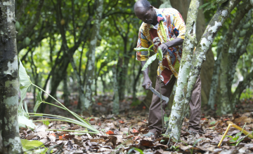 Sao Tome: Agri-Partnerships Pay Off