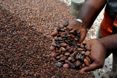 Cocoa beans on display.