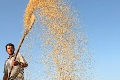 Photo d'Archives: Production céréalière mondiale record pour 2011 avec 2 323 millions de tonnes