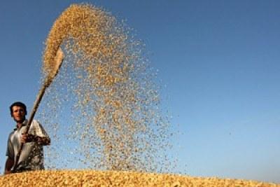 Production céréalière mondiale record pour 2011 avec 2 323 millions de tonnes