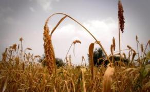 Uganda Parliament Probes U.S.$41 Million South Sudan Grain Deal