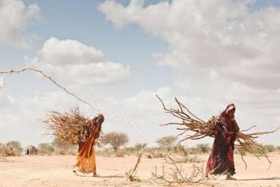 Le changement climatique entraîne des déplacements croissants en Afrique, où des régions sont ravagés par la sécheresse