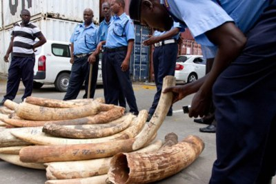 Kenya police net ivory at the Mombasa port which is said to be a major transit route for smugglers.