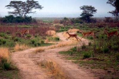 Une vue du parc national des Virungas située dans la province du Nord-Kivu dans l'est de la RDC