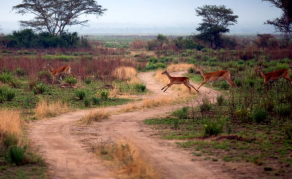 Le parc des Virunga en RDC fermé aux touristes jusqu'en 2019