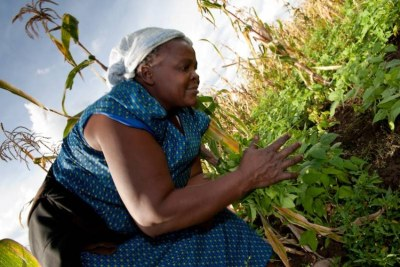 Secure tenure also means less potential for conflict and arbitrary eviction; increased opportunity for land rental and sales markets to transfer land to more productive users.  And it builds household resilience to climate, environmental, financial, and health shocks by providing families a safety net.