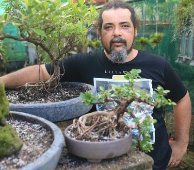 Miniature Trees Grown in Seychelles, Part of Japanese Art of Bonsai