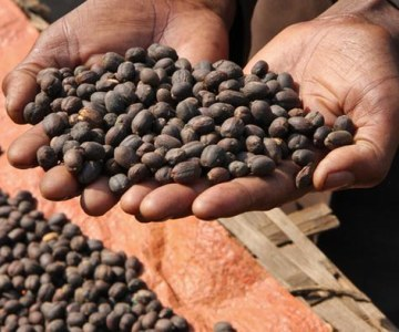 Ethiopia: Humble Home of the Coffee Industry