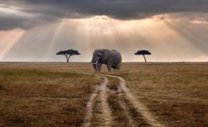Tourism Boom Is Key to Tanzania's Economic Growth