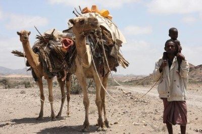 A pastoralist's pain