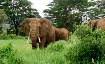 Tanzania Winning War on Elephant Poaching