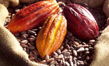 Echec de la réunion de la filière cacao à Abidjan