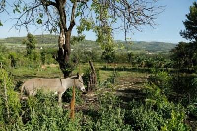 A typical smallholder farm.