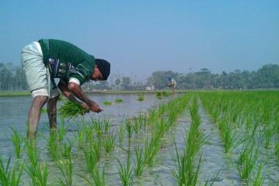 Paysans dans leur plantation