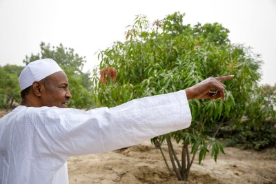 President Buhari on his farm.
