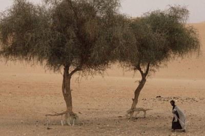 La Mauritanie vit actuellement un nouvel épisode de sécheresse qui déstabilise le monde agropastoral. (Image d'illustration).