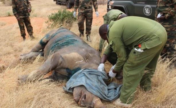 Image result for Tsavo Rhinos
