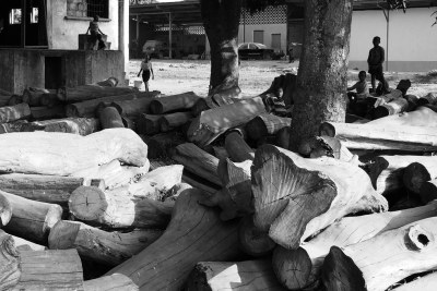 Rosewood stockpile in Guinea Bissau