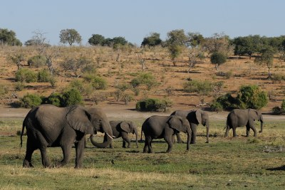 Botswana has the largest elephant population in Africa.