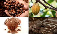 Rising Cocoa Prices May Bring End to Child Labour in Ghana