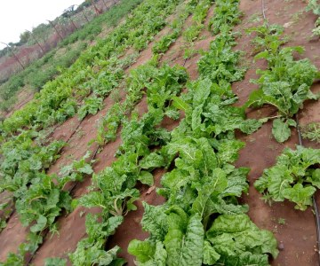 Natiira Ateni Farmers Produce Crops For Market, Own Use After Borehole Installation