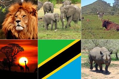 Wildlife in Tanzania (file photo).