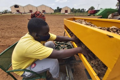 Training of women and youth on mechanized Ginger planting in ridges which eases weeding and improves overall output.  The planter makes the ridges and plants at the same time.